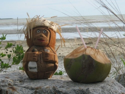 The Humble Coconut