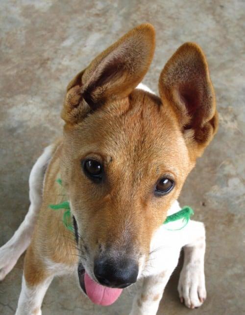 Langkawi Animal Shelter & Sanctuary