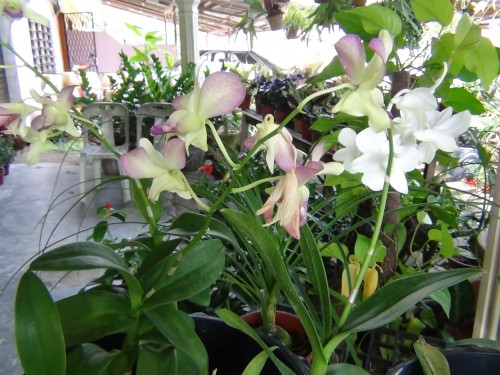 They have an assortment of orchids too