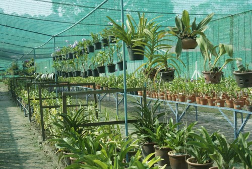 Visit to the Langkawi Orchid Farm