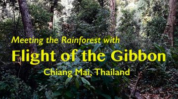 Meeting the Rainforest with Flight of the Gibbon