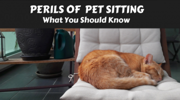 Perils of Pet Sitting, What You Should Know