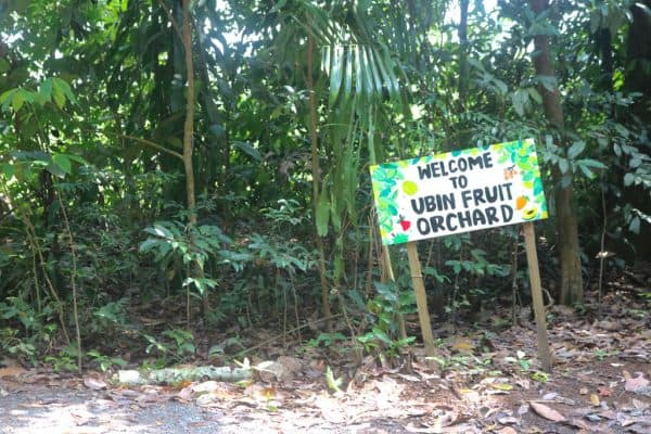 Day Trip Tour to Singapore's Historic Island, Pulau Ubin