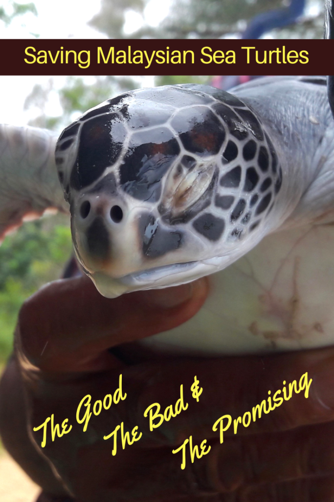 Saving Malaysian Sea Turtles; the Good, the Bad & the Promising