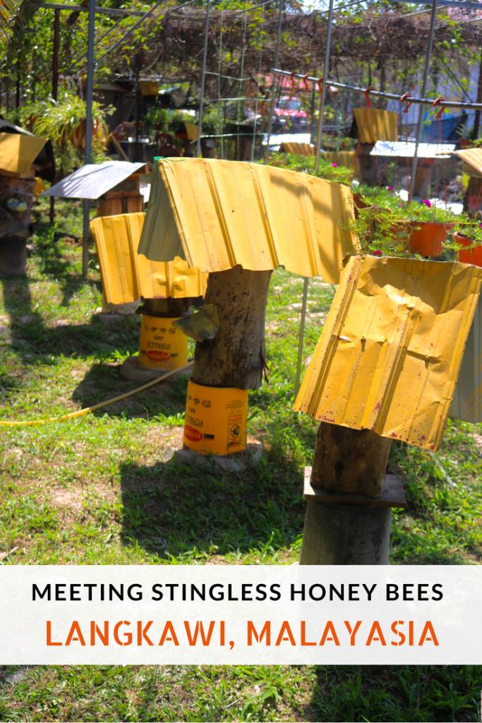 Meeting Stingless Honey Bees in Langkawi