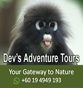devs adventure tours