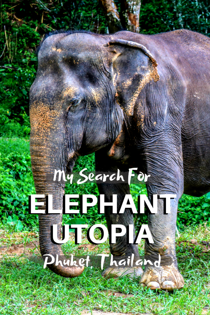My Search for Elephant Utopia in Phuket