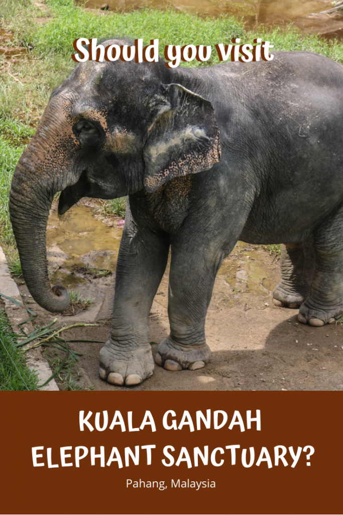 Should You Visit Kuala Gandah Elephant Sanctuary?