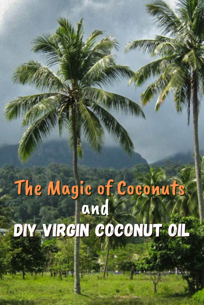The Magic of Coconuts and DIY Virgin Coconut Oil