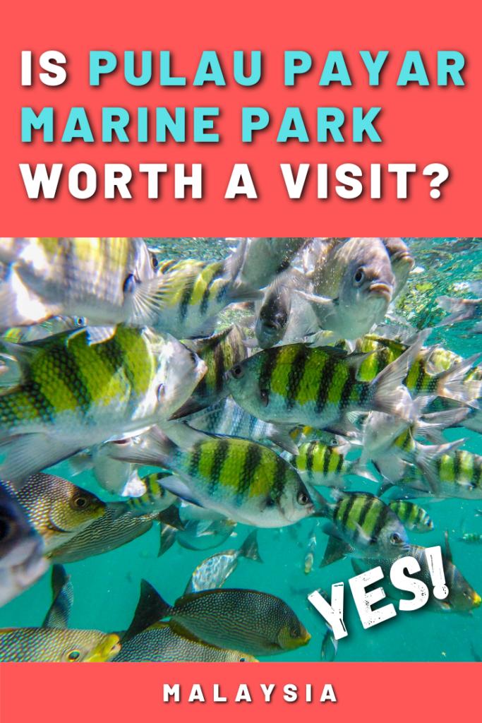 Is Pulau Payar Marine Park Worth a Visit? Yes!
