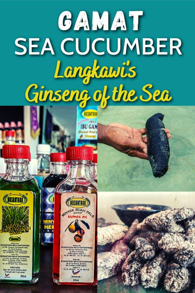 Gamat Sea Cucumber, Ginseng of the Sea